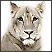 Portreti divljih životinja