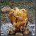 Ispecite piletinu bez pećnice