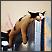 Mačke spavaju na čudnim mjestima