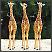 Mlade žirafe