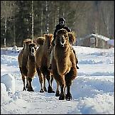 Deve žive u Norveškoj