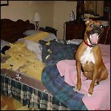 Psi huligani