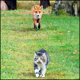 Lisica i mačka