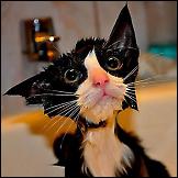 Mokre mačke