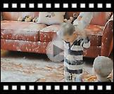 Djeca pronašla brašno