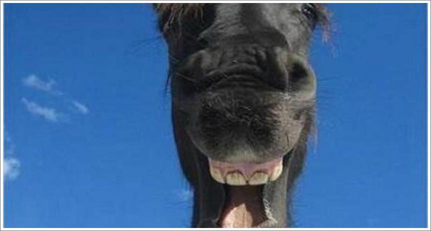 I konji se smiju