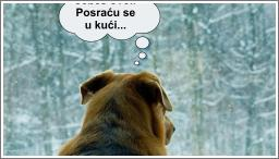 I psi su shvatili #stayathome