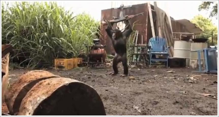 Majmun sa Kalašnjikovim