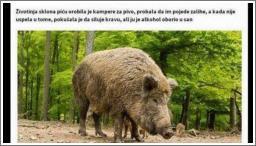 Muškarci su svinje...