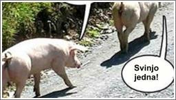 Problemi jedne svinje...